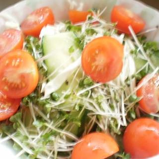 きゅうりとキャベツトマトの生野菜サラダ