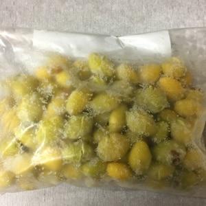 銀杏の冷凍保存