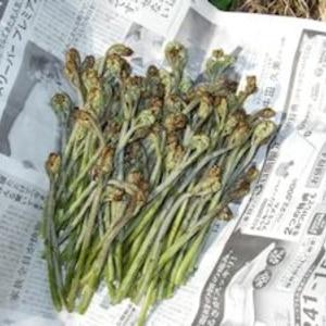 春の山菜!灰or重曹or木炭で基本の灰汁抜き!