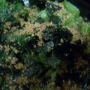 ::風味がいい ほうれん草のゴマ海苔和え::