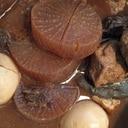 圧力鍋で時短!名古屋の味噌おでん