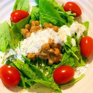 今日の納豆●ルッコラのサラダと豆乳クリームソース
