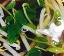 豆苗の中華スープ