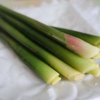 春の香りを味わう♪ミョウガタケの和風ピクルス