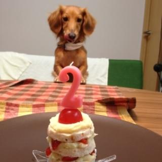 ワンコのバースデーケーキ♡