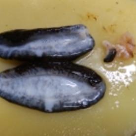 ナマコ の さばき 方