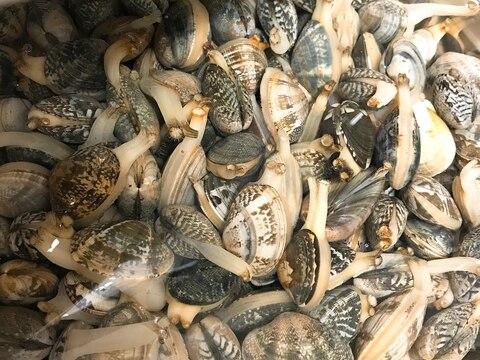 基本!潮干狩りで採った貝の砂抜き方法