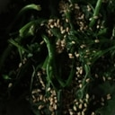 茎ブロッコリーの酢の物