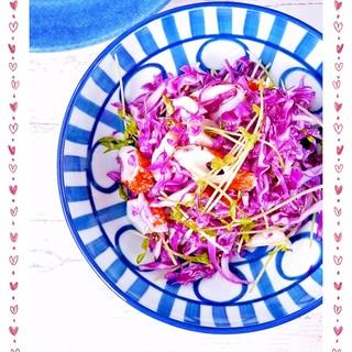 紫キャベツと豆苗の簡単あえサラダ