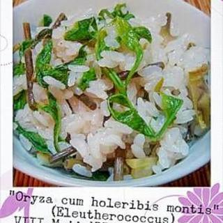 懐かしの香ばしいコシアブラの炊き込みご飯