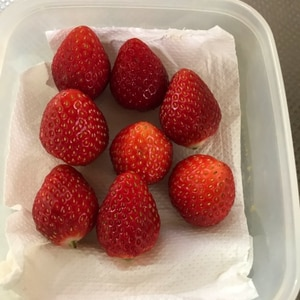 苺の保存方法
