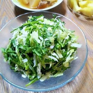 簡単なのに絶品すぎ!春菊とキャベツのサラダ
