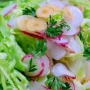 春キャベツとラディッシュのサラダ