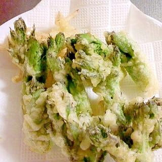 春の味3 タラの芽の天ぷら