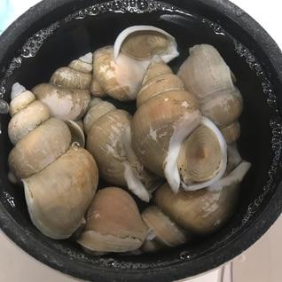 白バイ貝の茹で方