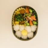 人参 お弁当