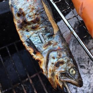 バーベキューにも◎炭で焼くあまごの塩焼き