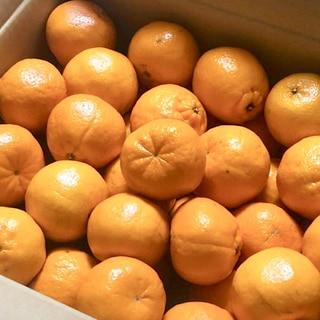 簡単裏技!ポンカンみかん柑橘類の長持ち保存方法♩