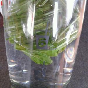 爽やかグリーンのレモングラス緑茶