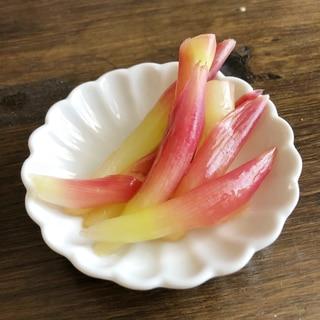 簡単!ピンクが綺麗なみょうがの茎の甘酢漬け