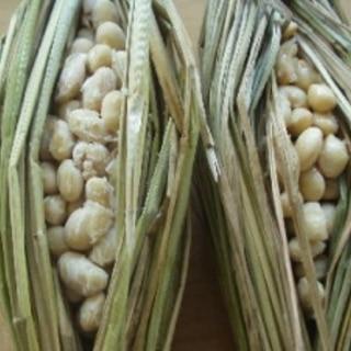 藁で納豆作り