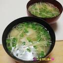 豆腐とかいわれ大根のお味噌汁