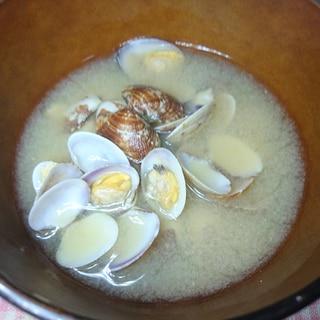 潮干狩りの小さなあさりのお味噌汁