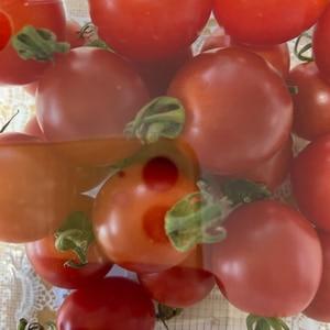 ミニトマトの冷凍