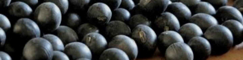 黒豆2810