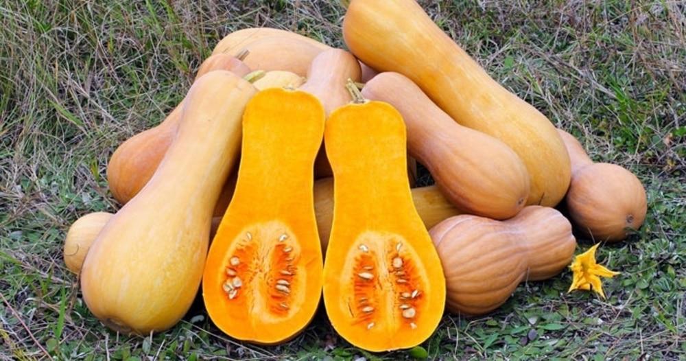 バターナッツかぼちゃとは