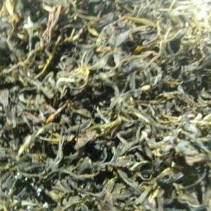 手作り茶  お茶の葉&桑の葉