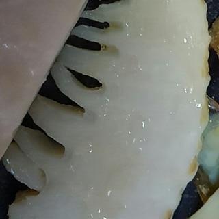 一番美味しい♪筍の食べ方 グリル焼き
