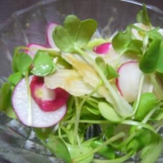レタス、ラディッシュ、間引き菜のサラダ