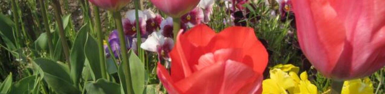 rosemary0624