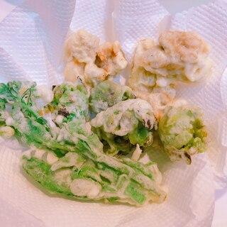 春ですね☆ふきのとうとアスパラ菜と鶏の天ぷら