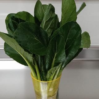 小松菜の茎の筋っぽい食感をやわらかくする方法
