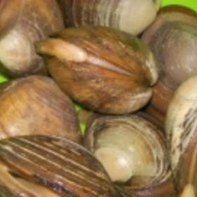 ホッキ貝のさばき方
