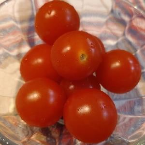 パツパツが長持ち♪ ミニトマトの保存方法