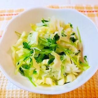 キャベツと大根と豆苗の和風サラダ