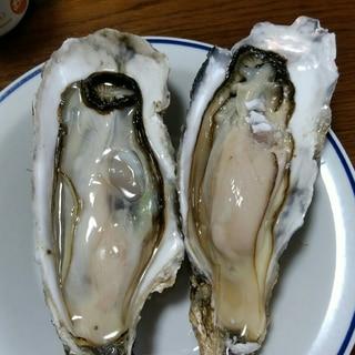 築地直伝生牡蠣の殻の剥き方