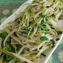 【節約レシピ】もやしと豆苗の中華風サラダ