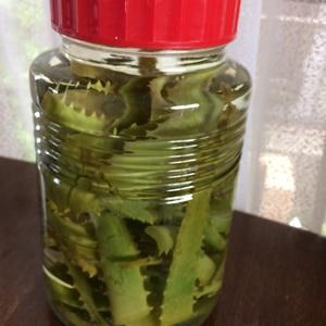 手作りアロエ酒