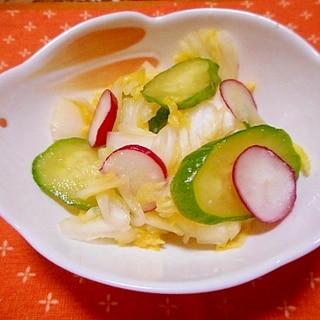 簡単!塩麹で白菜・胡瓜・ラデッシュの浅漬け