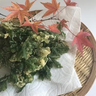 野草をゲット! ヨモギの天ぷら よもぎ 蓬