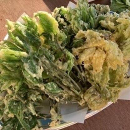 たくさん収穫したんでどっさりっ!!塩もいいけどお醤油ぽちぽち、もオイシイですよね春の恵みをドウモゴチソ様!