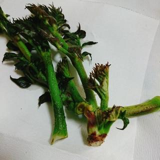 タラの芽のオリーブオイル焼き