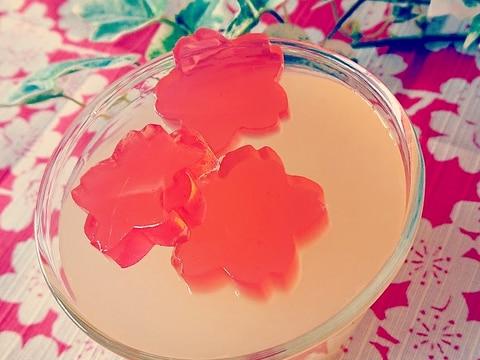 寒天屋さんの桜かんてん