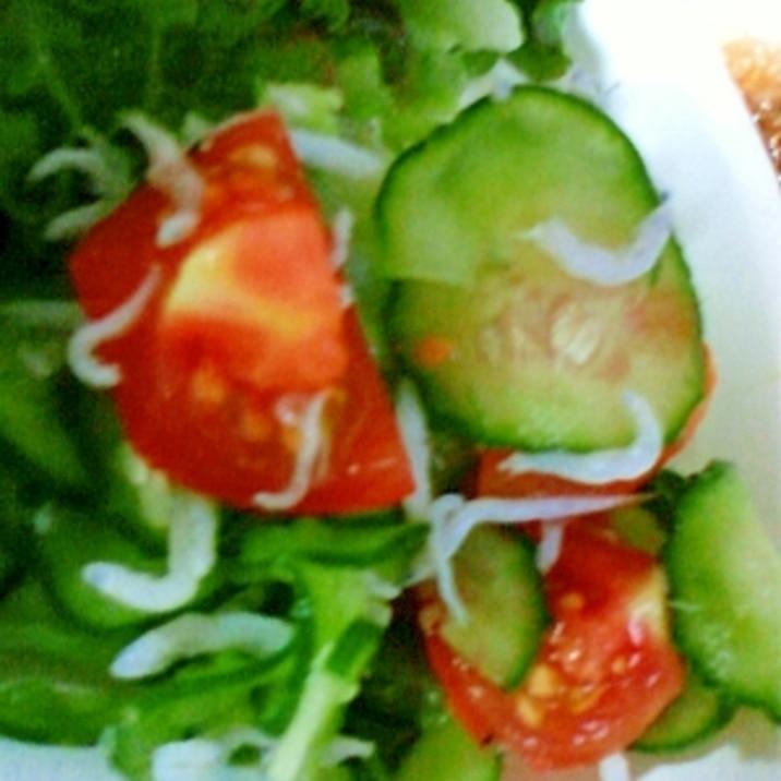 夏野菜と一緒に!シラスときゅうりの酢の物