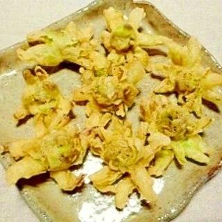 花咲く☆蕗の薹の天ぷら