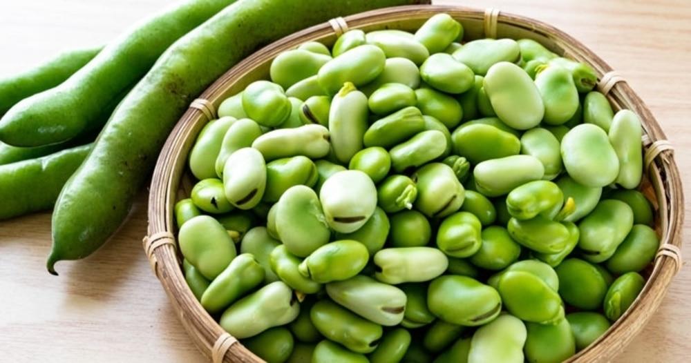 初夏に旬を迎える豆(1)「そら豆」